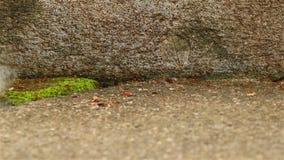 Una trayectoria con las porciones de hormigas almacen de metraje de vídeo
