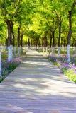 Una trayectoria de bosque con un caballete de madera con las flores púrpuras Trayectoria arbolada soleada, día soleado fotos de archivo