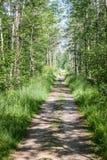 Una trayectoria de la suciedad a través de un bosque verde fotos de archivo