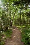 Una trayectoria de la suciedad a través del bosque en un día soleado Imagenes de archivo