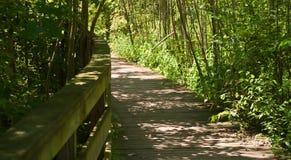 Una trayectoria de madera en el bosque en el verano Foto de archivo
