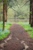 Una trayectoria del pajote alineó por los árboles dirigidos al lago Marmo en Morton Arboretum imagenes de archivo