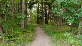Una trayectoria del pie de la suciedad en el bosque Fotografía de archivo