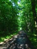 Una trayectoria en el bosque Imagenes de archivo