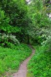 Una trayectoria en el bosque del verano lleva a un puente de madera Tiro vertical Fotografía de archivo libre de regalías