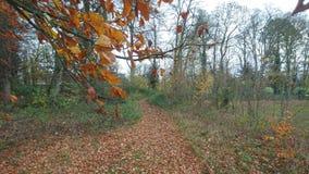 Una trayectoria frondosa del otoño a través de la madera Fotografía de archivo libre de regalías