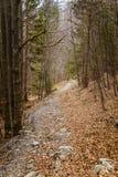 Una trayectoria hermosa de la montaña a través del bosque con las hojas de otoño Fotos de archivo