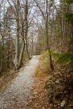 Una trayectoria hermosa de la montaña a través del bosque con las hojas de otoño Fotografía de archivo