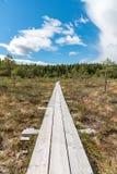 Una trayectoria hermosa a través de un gran pantano en Storfors Suecia Fotos de archivo libres de regalías