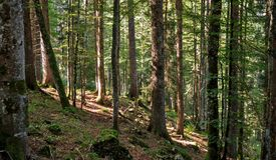 Una trayectoria lleva hacia arriba entre los árboles de un bosque situado en las montañas suizas del Jura Fotografía de archivo libre de regalías