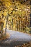 Una trayectoria magnífica a través de los árboles de oro en otoño en Morton Arboretum imagen de archivo