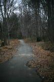 Una trayectoria pavimentada en un bosque del invierno con los árboles estériles Foto de archivo