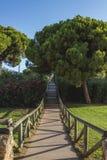 Una trayectoria por completo de árboles de la manera a la playa en Punta Umbría, Huelva, España Imágenes de archivo libres de regalías