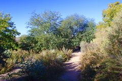Una trayectoria sombría del desierto Foto de archivo libre de regalías