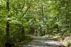 Una trayectoria a través de un bosque Imagen de archivo libre de regalías