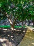 Una trayectoria a través de un parque Fotos de archivo