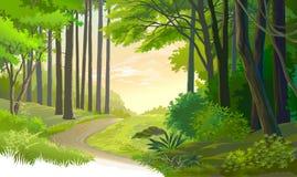 Una trayectoria vieja a través de un bosque antiguo stock de ilustración