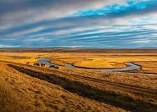 Una tribù dei cavalli selvaggii che mangiano erba in un campo fotografia stock