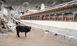 Una vaca con rezo rueda adentro el pueblo de Nepal, paisaje en Annapur Imágenes de archivo libres de regalías
