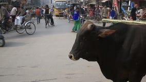 Una vaca en medio del tráfico