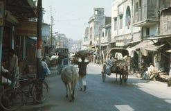 Una vaca santa, en la calle principal. Imágenes de archivo libres de regalías