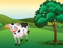 Una vaca sonriente Foto de archivo