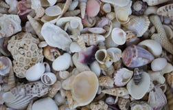 Una variedad de conchas marinas Cáscaras coloridas del molusco Textura de la concha marina Imagenes de archivo