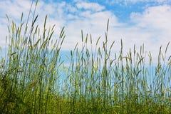 Una variedad de hierbas en el tiempo de verano Foto de archivo