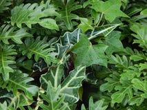 Una varietà verde di foglie Fotografie Stock