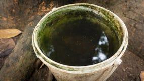 Una vasca di plastica con l'uovo di nido della zanzara su malaria di causa dell'acqua dolce fotografia stock libera da diritti