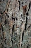 Una vecchia corteccia di albero Fotografia Stock Libera da Diritti