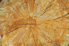 Una vecchia e sezione trasversale incrinata di un albero che mostra i suoi anelli immagini stock libere da diritti