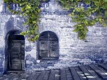 Una vecchia parete misteriosa con la pianta dell'uva nel blu Fotografia Stock Libera da Diritti