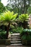 Una vegetación hermosa, verde de parques en Londres Hojas del verde en verano imagen de archivo libre de regalías