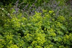 Una vegetación hermosa, verde de parques en Londres Hojas del verde en verano fotografía de archivo