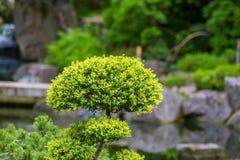 Una vegetación hermosa, verde de parques en Londres Hojas del verde en verano imagenes de archivo