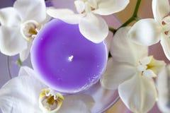 Una vela púrpura rodeada por las flores blancas Foto de archivo libre de regalías