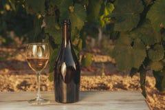 Una vetro e bottiglia del vino bianco nella vigna di autunno Immagine Stock Libera da Diritti
