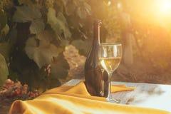 Una vetro e bottiglia del vino bianco nella vigna di autunno Fotografie Stock Libere da Diritti