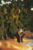 Una vetro e bottiglia del vino bianco nella vigna di autunno Fotografia Stock Libera da Diritti