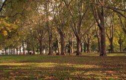Una via con una fila dell'albero in autunno Immagine Stock