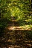 Una via coperta dalle foglie in una foresta densa di raggi filtrati Immagini Stock Libere da Diritti