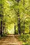 Una via coperta dalle foglie in una foresta densa di raggi filtrati Immagine Stock Libera da Diritti