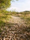 Una via di lanugine caduta graziosa dagli alberi celesti e dalle nozze immagine stock
