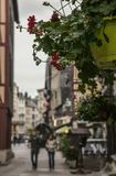 Una via a Rouen, Francia - fiori Immagine Stock