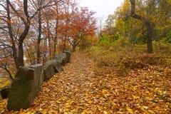 Una via in una foresta lungo l'alta sponda del fiume in autunno Fotografie Stock