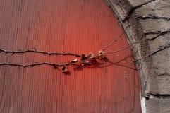 Una vid a través de una puerta de madera roja Fotos de archivo libres de regalías