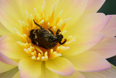 Una vida del insecto imagen de archivo libre de regalías
