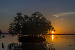 Una vida más larga de los árboles Muerte en la puesta del sol Imagen de archivo libre de regalías