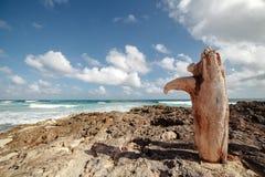 Una vieja conexión la costa de Cozumel méxico imágenes de archivo libres de regalías